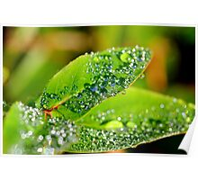 Natures Water Droplets Poster