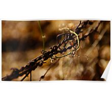 8-mile creek barbed wire Poster