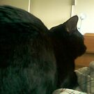 big butt kitty by catnip addict manor