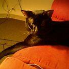bored by catnip addict manor
