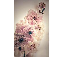 Vintage Cherry Photographic Print