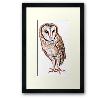 Barn owl drawing Framed Print