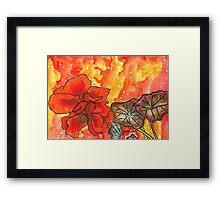 Red Nasturtium Framed Print