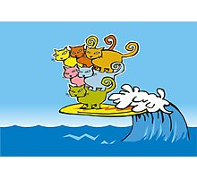 cat surfing Photographic Print