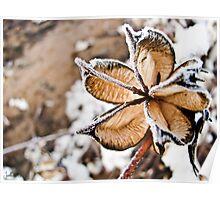 Frozen Cotton Flower Poster