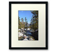 Sunshine in Winter Framed Print