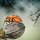 Orange stink bug 001 by kevin chippindall