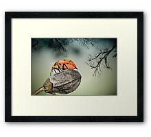 Orange stink bug 001 Framed Print