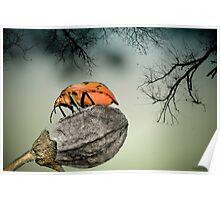 Orange stink bug 001 Poster