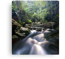 Tasmanian Stream Canvas Print