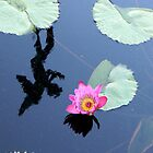 Water Lillies 10 by Brion Marcum