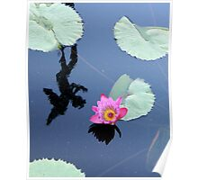 Water Lillies 10 Poster