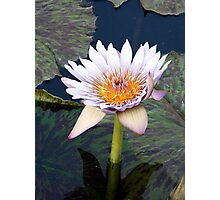 Water Lillies 11 Photographic Print