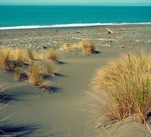 new zealand, a lonely beach by trinitywilson