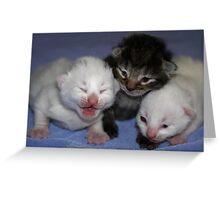 Kittens-One Week Old Greeting Card