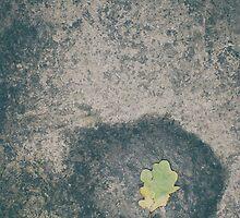 Autumn premonition by rodrimauricio