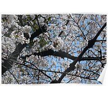 White Blossoms 2 Poster