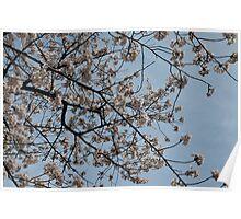 White Blossoms 3 Poster