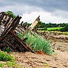 Abandoned boat, Saltmills, County Wexford, Ireland by Andrew Jones