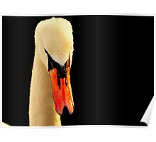 Swan Head On Black Poster