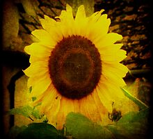 sunflower1 by Deb Gibbons