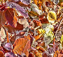 Fallen Autumn Leaves by lynn carter