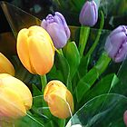 Gorgeous Tulips at the Market by EdsMum