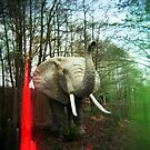 Holga elephant by redcow