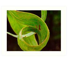 Gum leaf Art Print