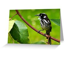 New Holland Honey Eater Greeting Card