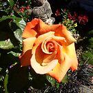 Rose 6 by Beverley  Johnston