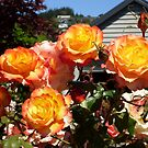 Rose 14 by Beverley  Johnston