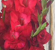 Red Gladiolus by bloomingvine
