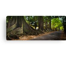 Lonely Road - Norfolk Island Canvas Print