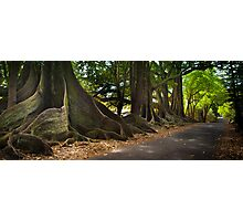 Lonely Road - Norfolk Island Photographic Print
