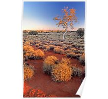 Ghost Gum and spinifex, western Queensland Poster