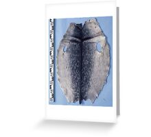 Special Ringed Seal Greeting Card