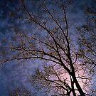 Glowing by © Jolie  Buchanan
