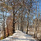 Winter Woodland Walk by Jim Wilson