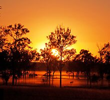 Aratula Sunrise by Beth  Wode