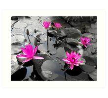 Pink Lotus Pool Art Print