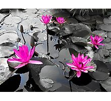 Pink Lotus Pool Photographic Print