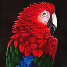 Green-winged macaw by Tania Richard