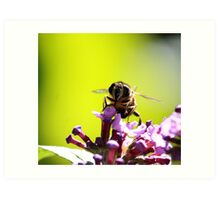 Busy Busy Bee 1 Art Print