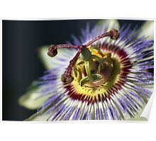 Passion For Flowers Poster