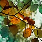 Seasons to be Cheerful by hologram
