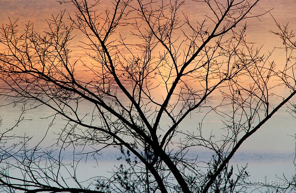 Tree at Sunrise - Ottawa River by Debbie Pinard