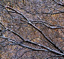 After the Freezing Rain (Featured in the Ottawa Citizen) by Debbie Pinard
