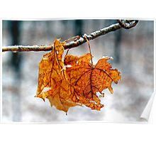 After the Freezing Rain 3 - Leaves Poster