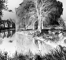 Reflection in Pond - Inverted - Kanata Ontario by Debbie Pinard